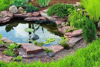 backyard landscaping scottsdale