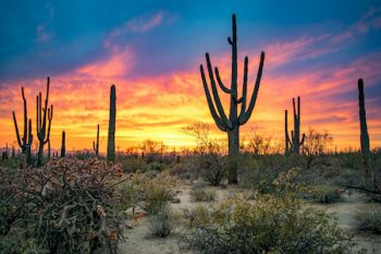 how to maintain desert landscapes